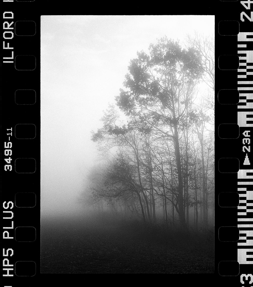 """Trees in the Fog - 1968 Nikon F with HP5+ film - the choice of film, camera, and processing gave me the """"look"""" I wanted but knowing how to get the shot was just as important."""