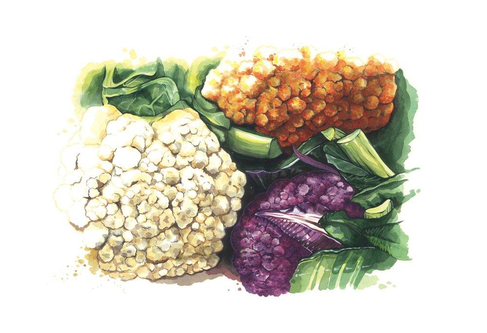 Cauliflowers by Lilly Louise Allen.jpg