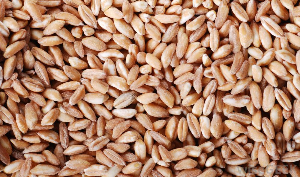 Farro, a grain of ancient Rome