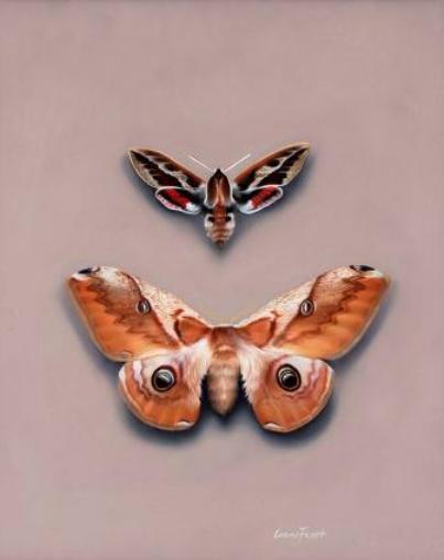Moths #1    Oil on Panel 8x10