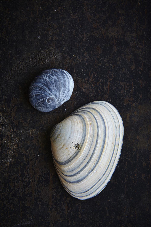 Shells 7-17-1530.jpg