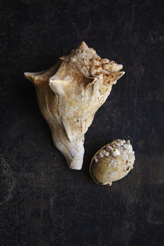 Shells 7-17-1571.jpg