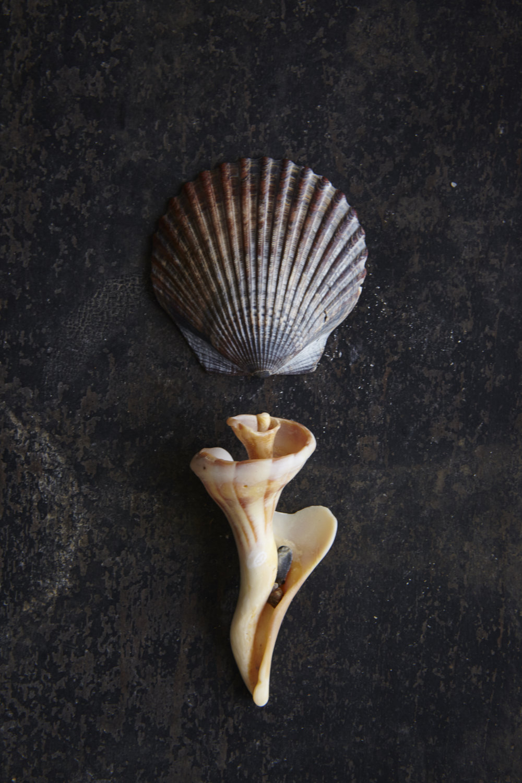 Shells 7-17-1577.jpg