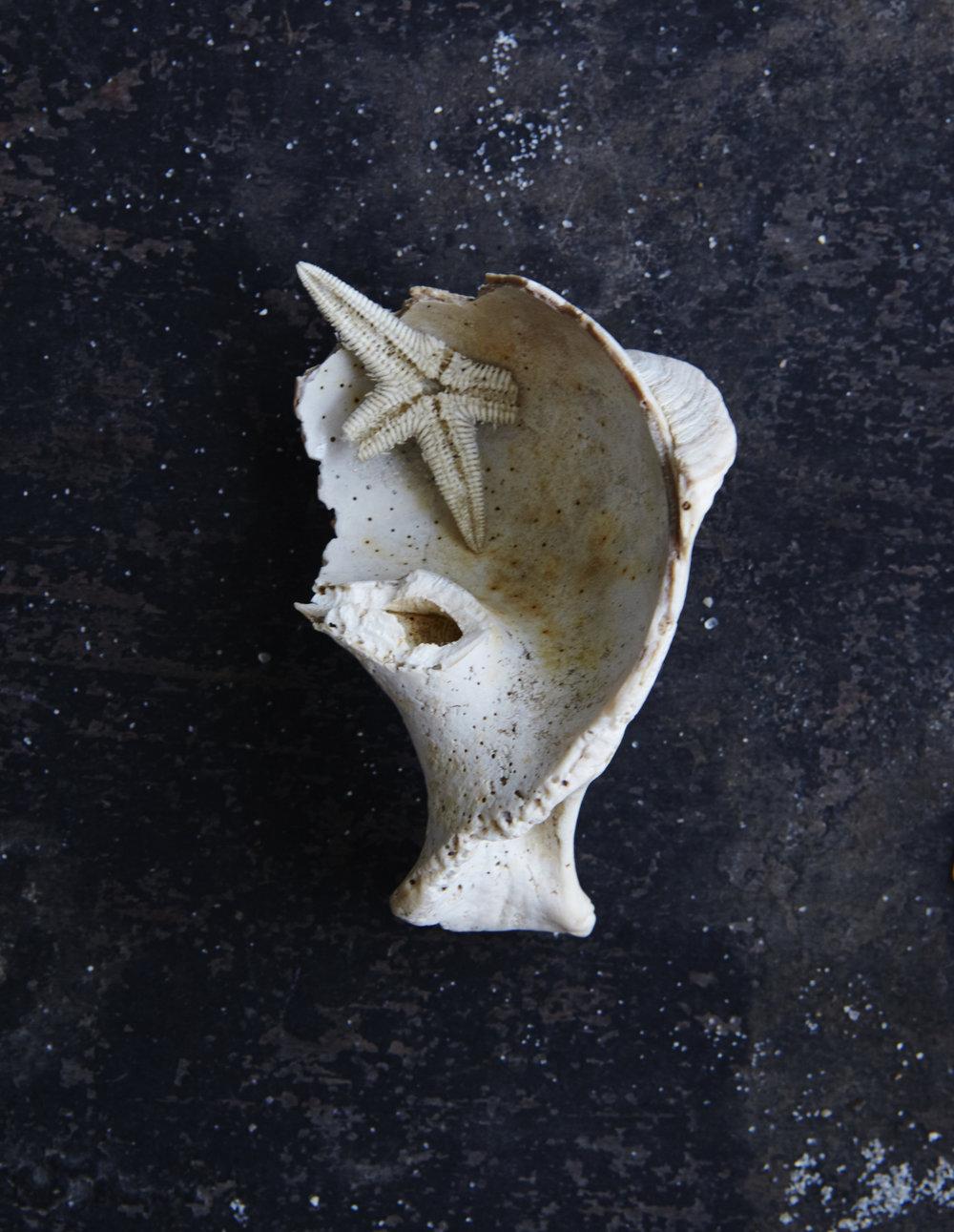 Shells 7-17-15116.jpg