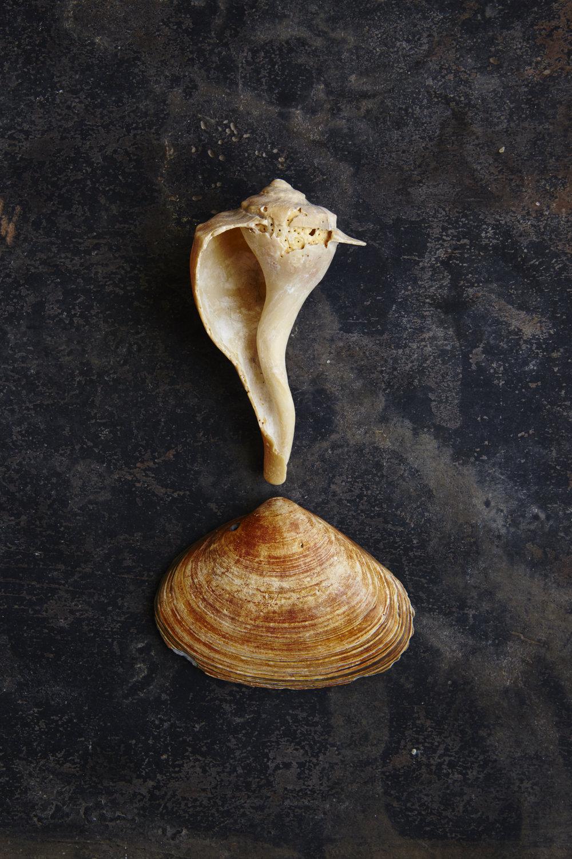 Shells 7-17-15100.jpg