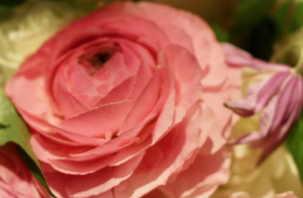 Petals. Philadelphia Flower Show, March 2019. Kristen Ghodsee