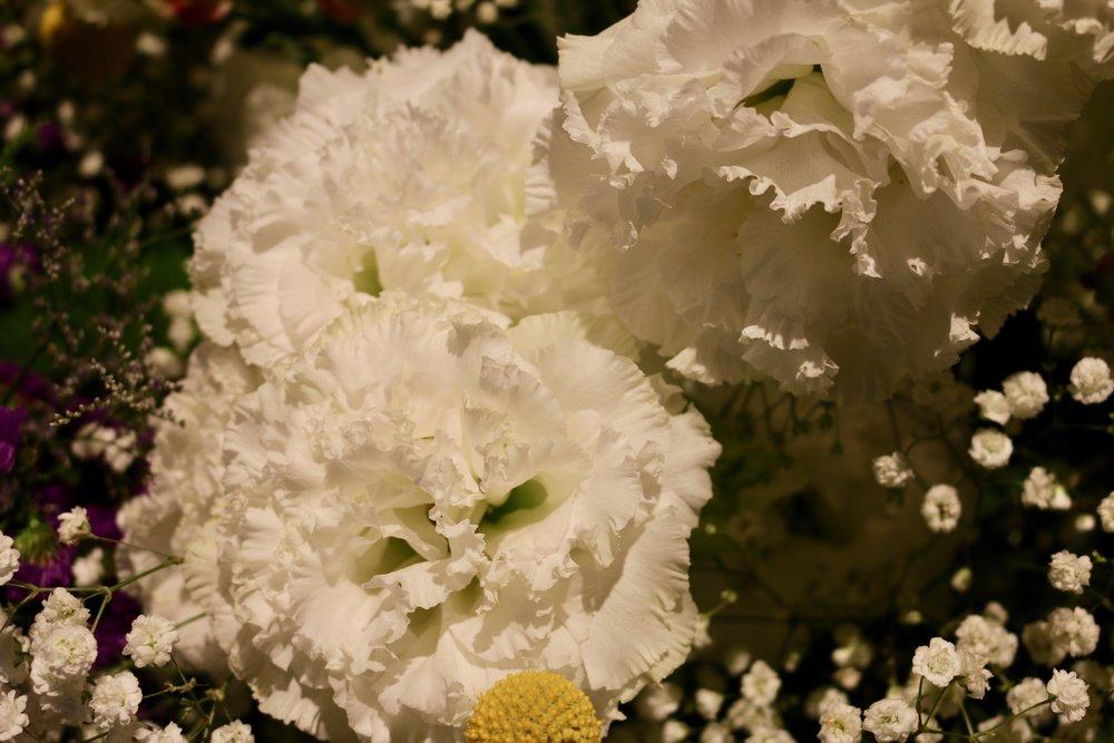 White ruffles. Philadelphia Flower Show, March 2019. Kristen Ghodsee