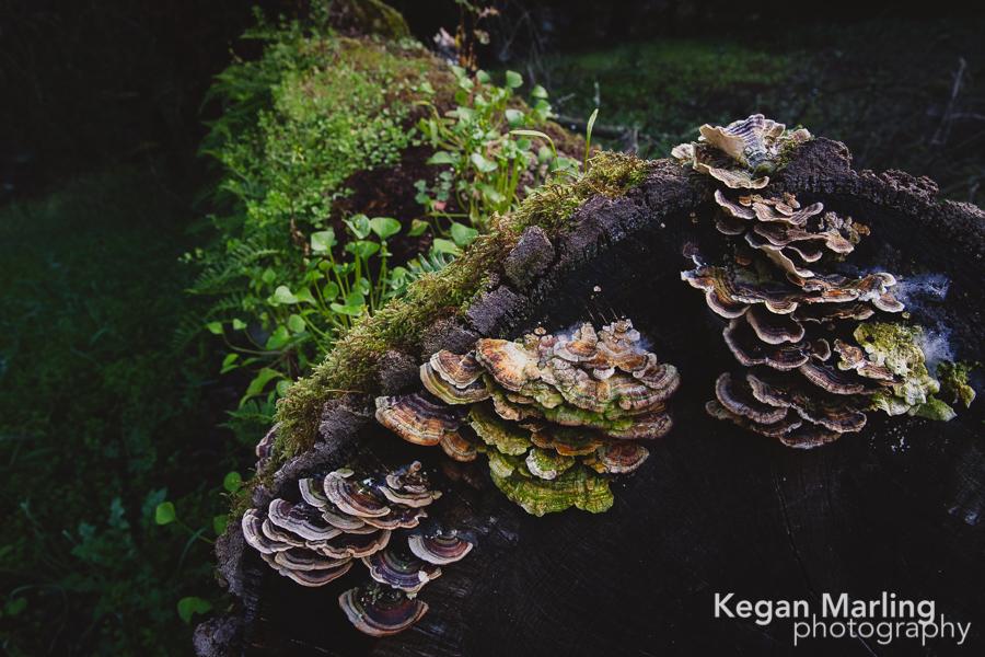 KeganMarling-Large-01.jpg