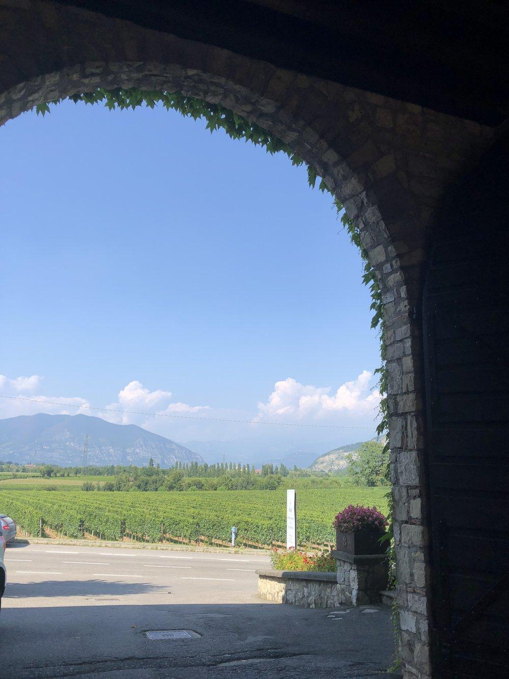 Franciacorta vineyards - Berlucchi.JPG
