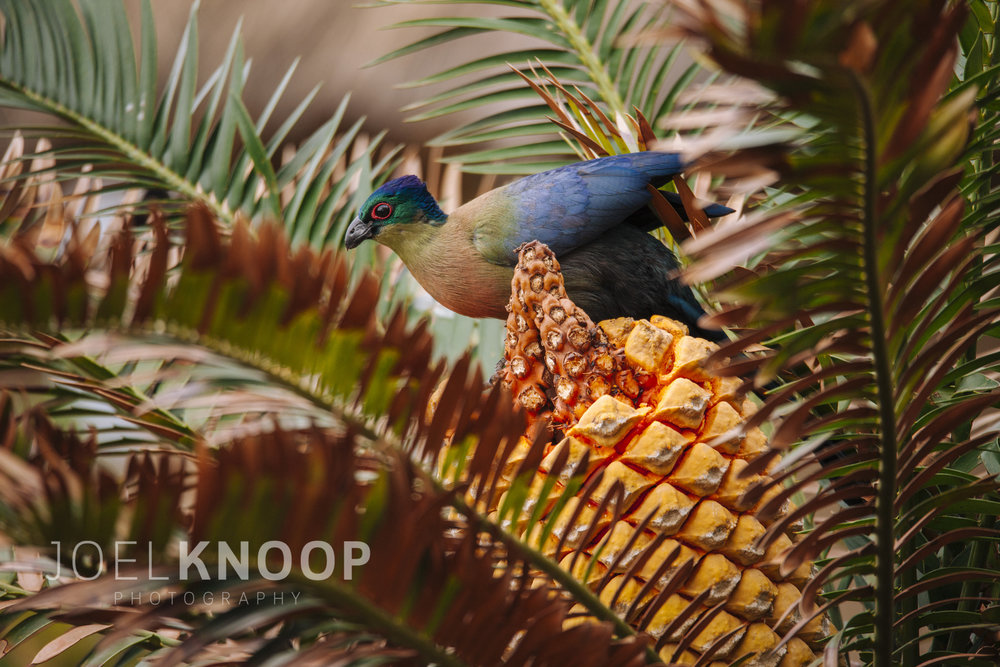 Bird-3617.jpg