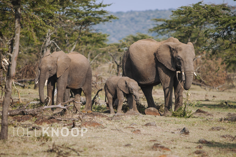Elephants-3567.jpg