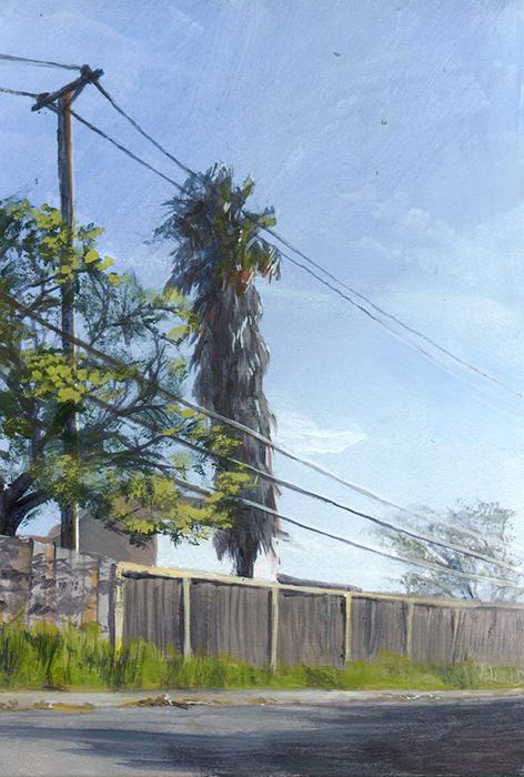 Palm Tree, San Jose
