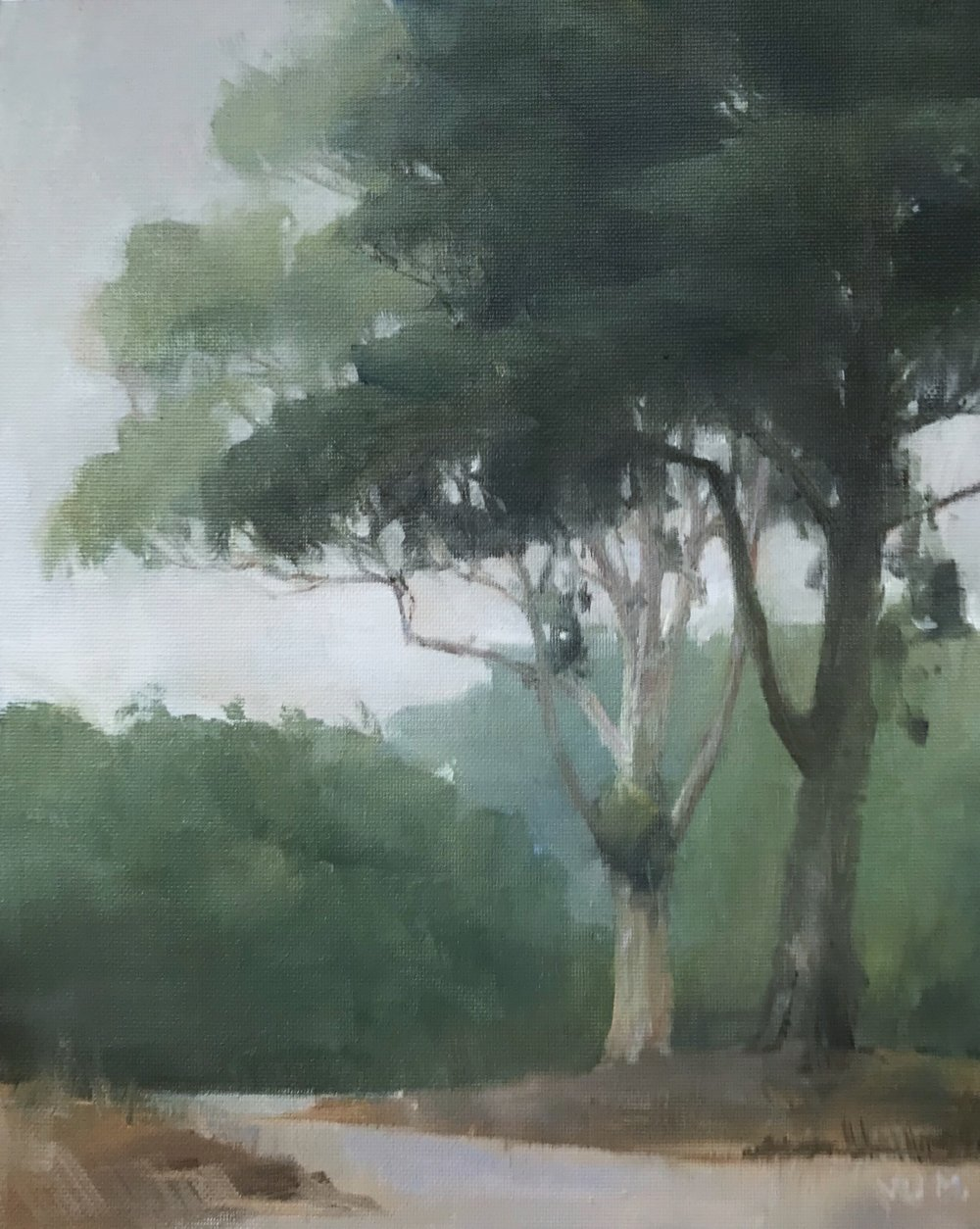 Eucalyptus at Golden Gate Park