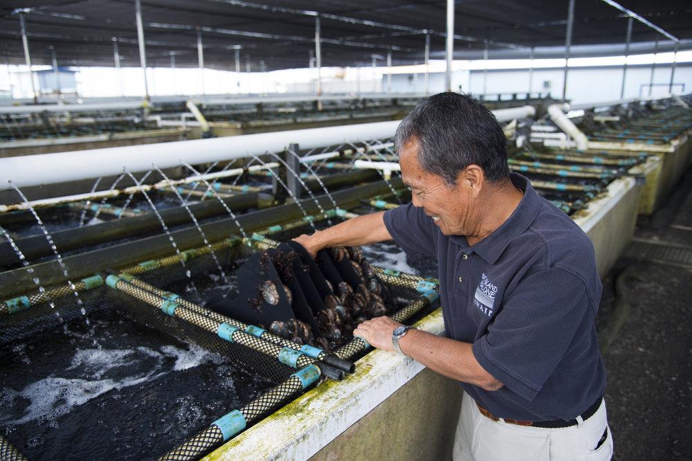 Kona Abalone Factory-2.JPG