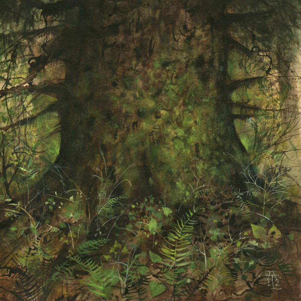 Copy of In Forests No. 41: Lutz Spruce