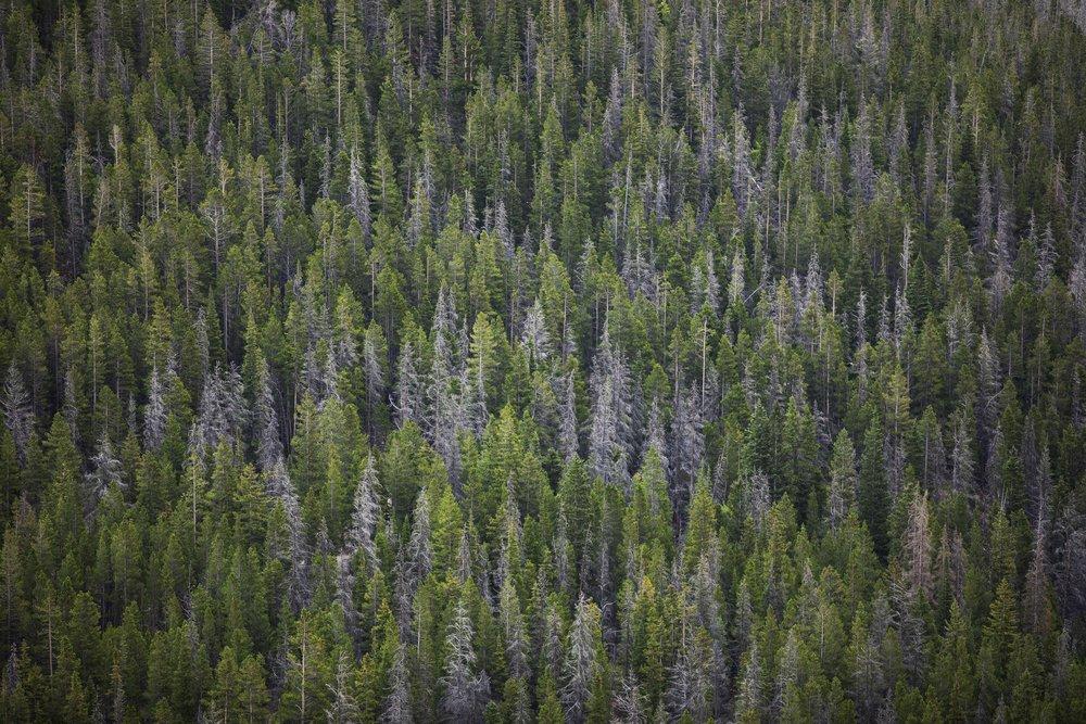 Trees - Rocky Mountain National Park, Colorado