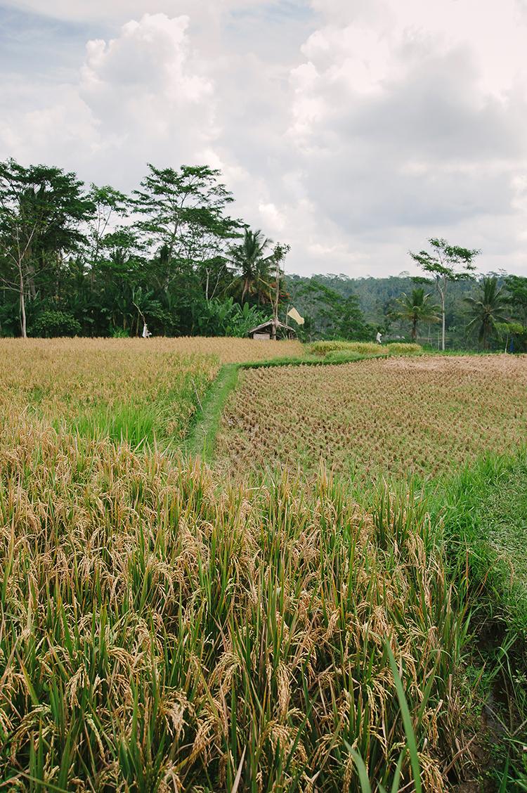 Bali-107