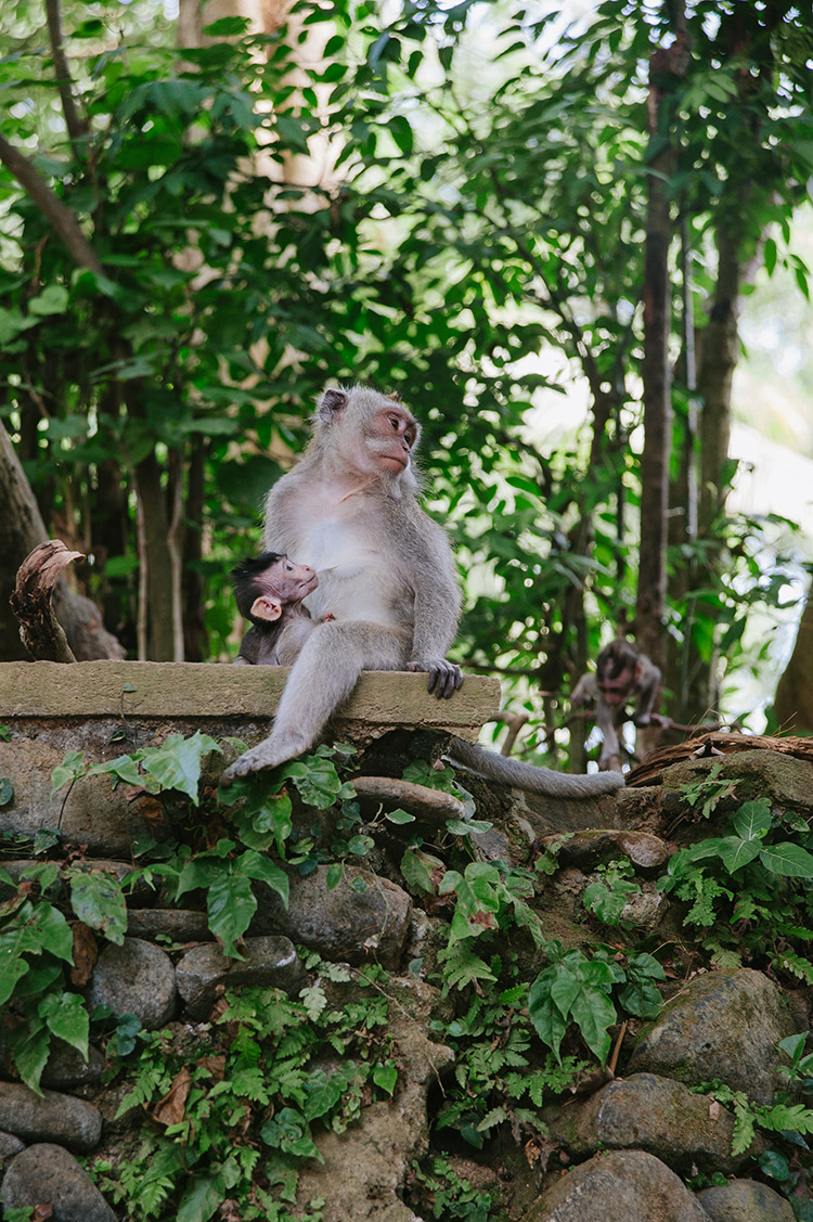 Monkey Forest Ubud - Picturette