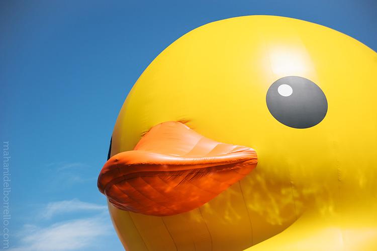 SF_Duck-1
