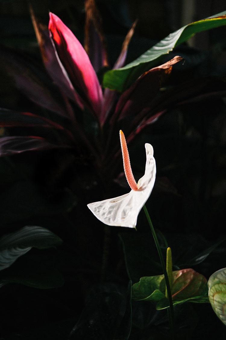 Wintergarden_Auckland-28