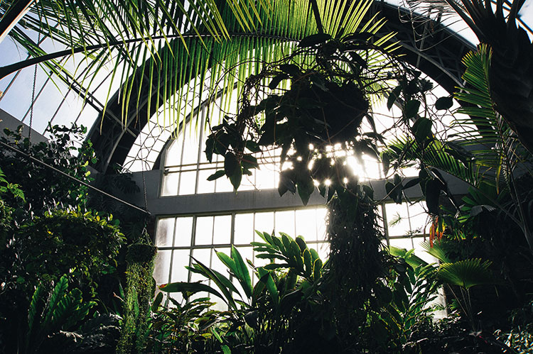 Wintergarden_Auckland-36