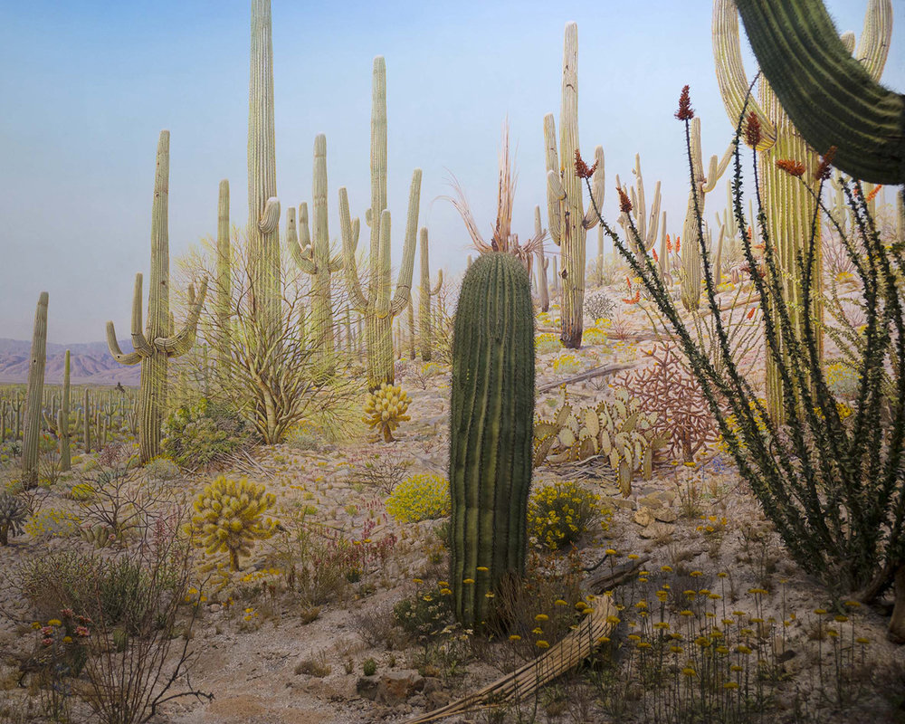Arizona #1 , 2015  Inkjet print on archival paper  43 3/10 × 55 1/10 in  110 × 140 cm
