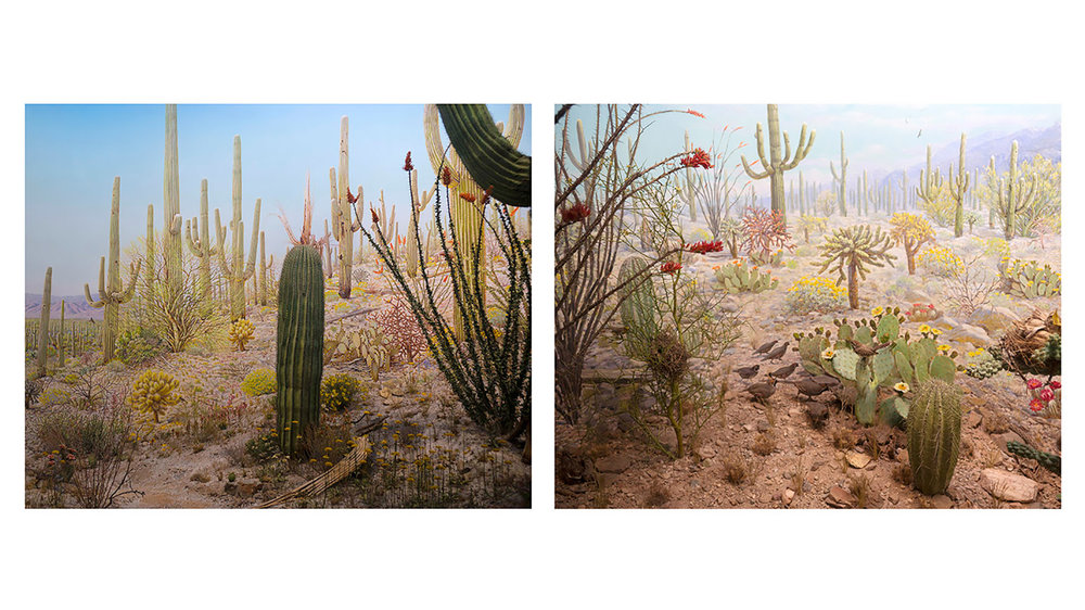 Arizona - diptych.jpg