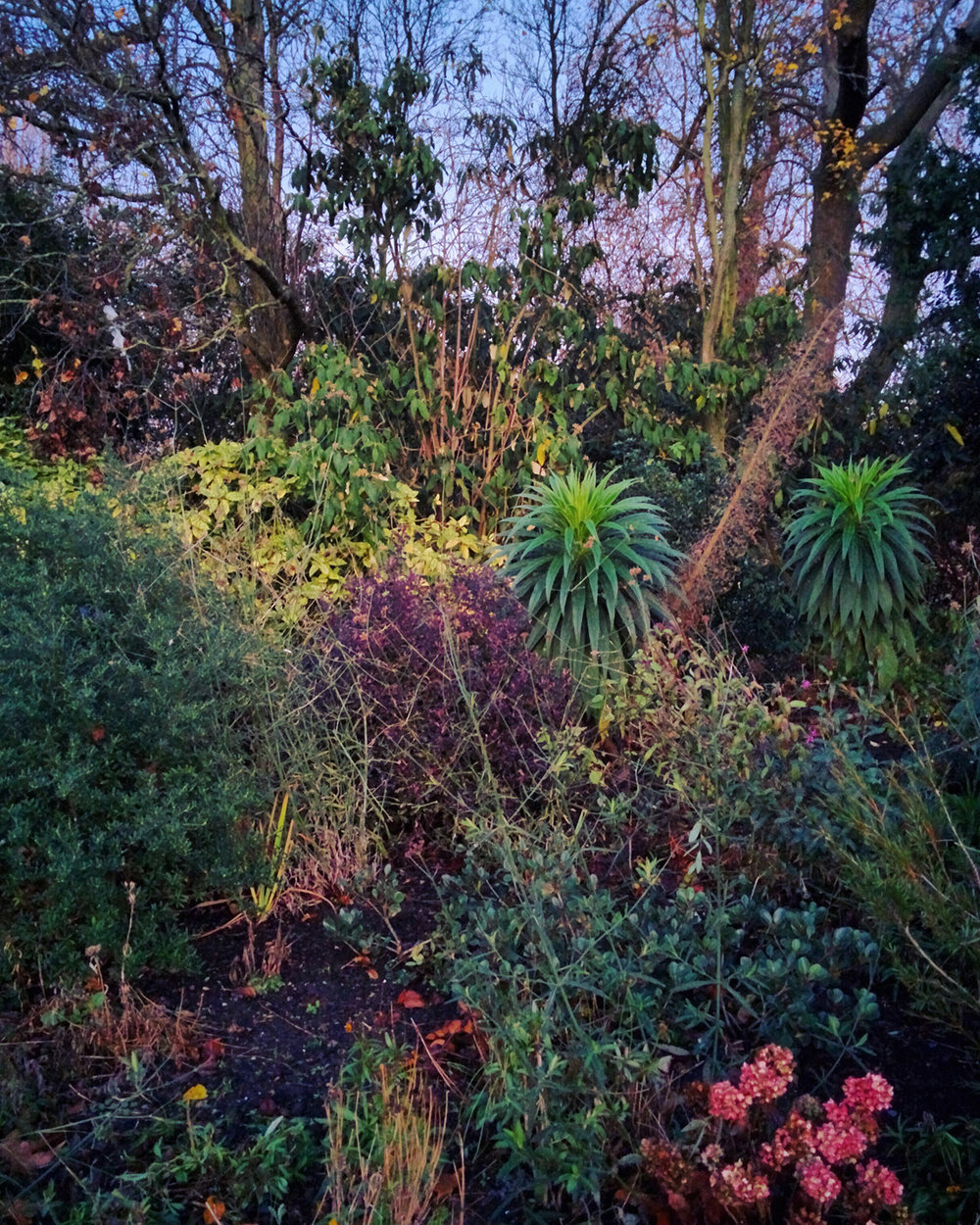 Jungle_010.jpg