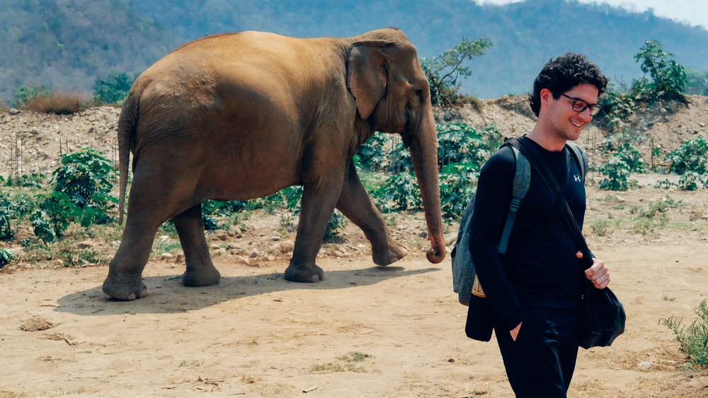 Walking with elephants at the Elephant Nature Park