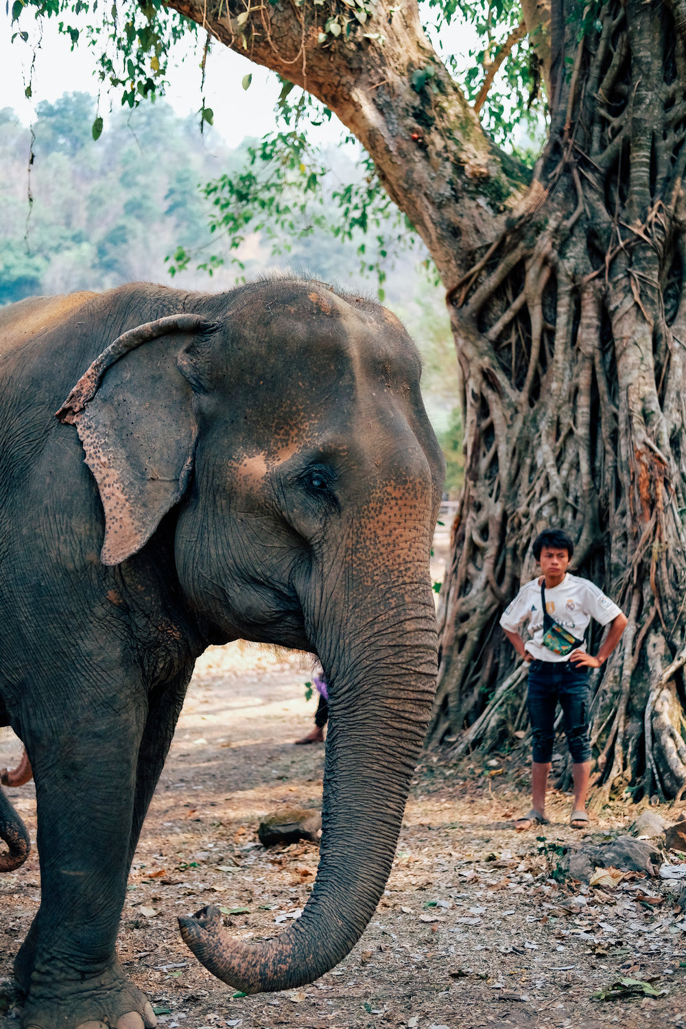 An elephant and volunteer at the Elephant Nature Park