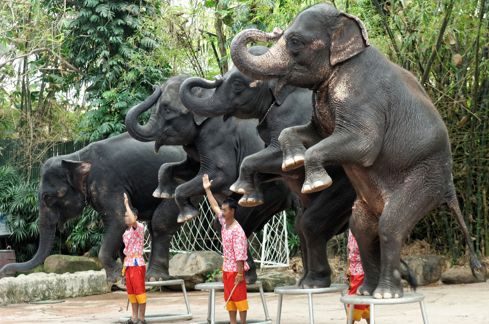 circus elephant.jpg