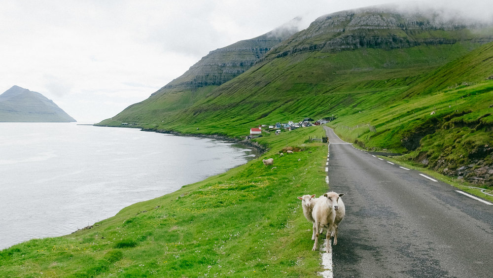 faroe islands_sheep_2017-6.jpg