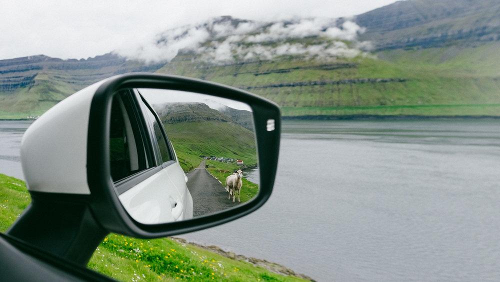 faroe islands_sheep_2017-7.jpg