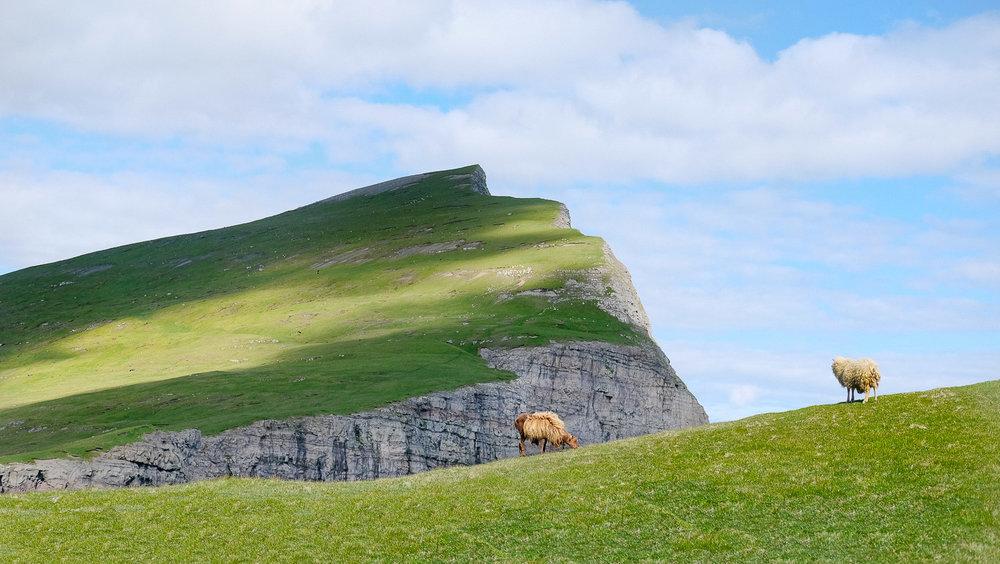 Sheep by Sørvágsvatn