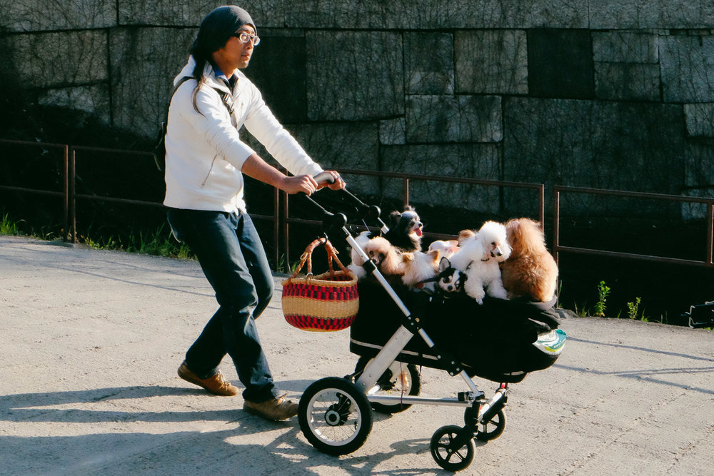 A Dog Walker in Osaka