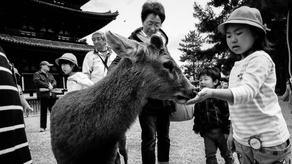 School kids feed deer at Nara Park