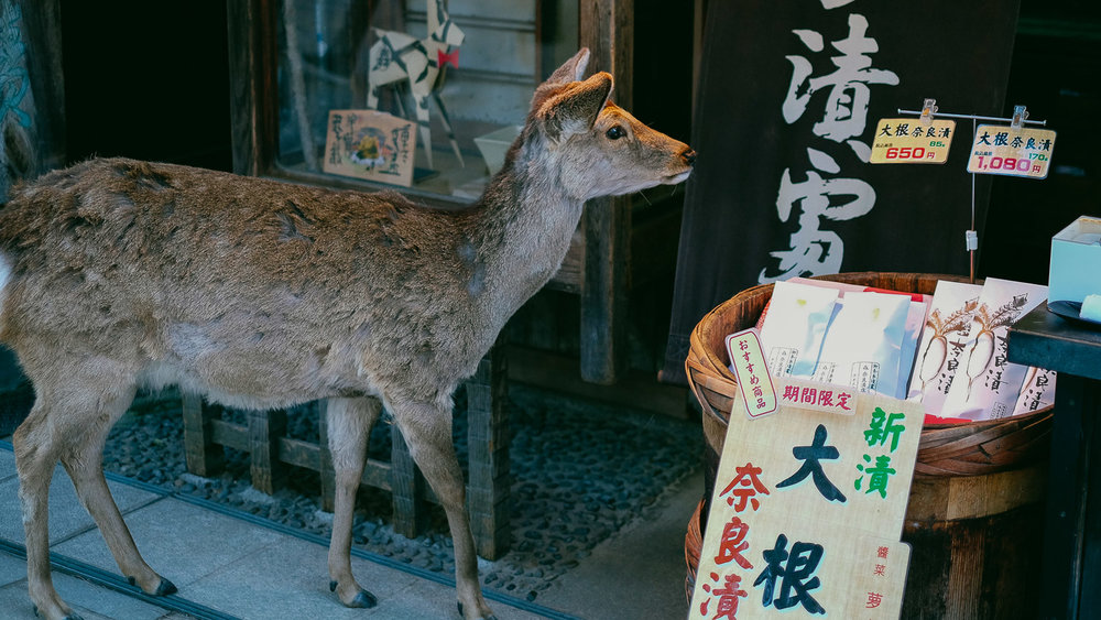 A deer in the shops at Nara Park