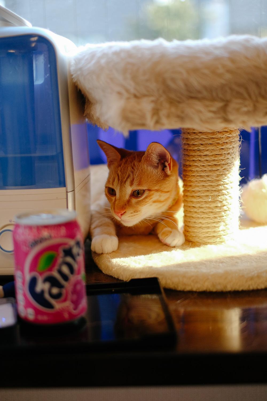 A cat in a cat café