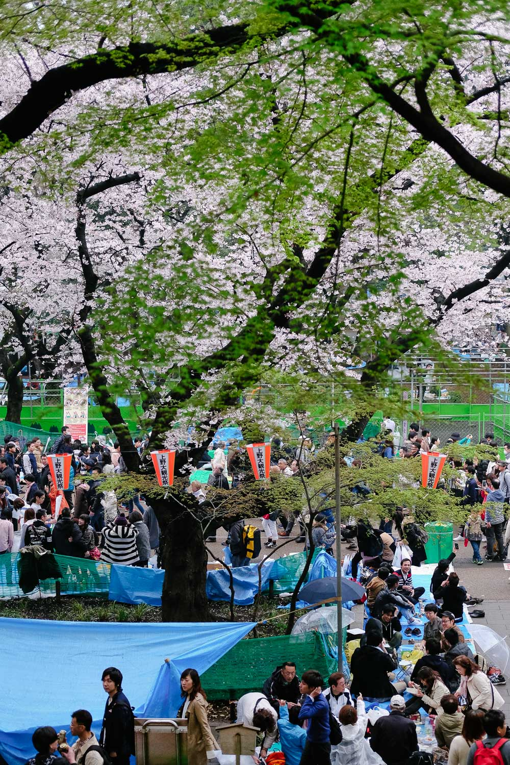 Sakura (cherry blossom) parties in Ueno Park