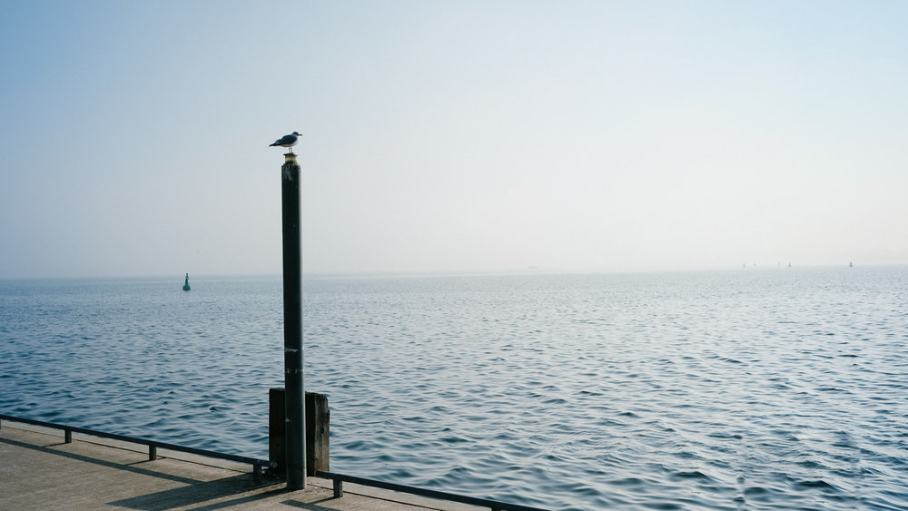 A bird resting by Lake Ontario