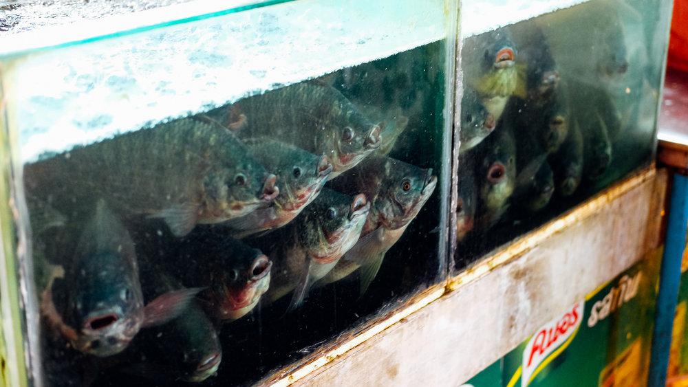 Fish at the market in Chiang Mai