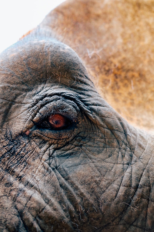 Closeup of an elephant's eye