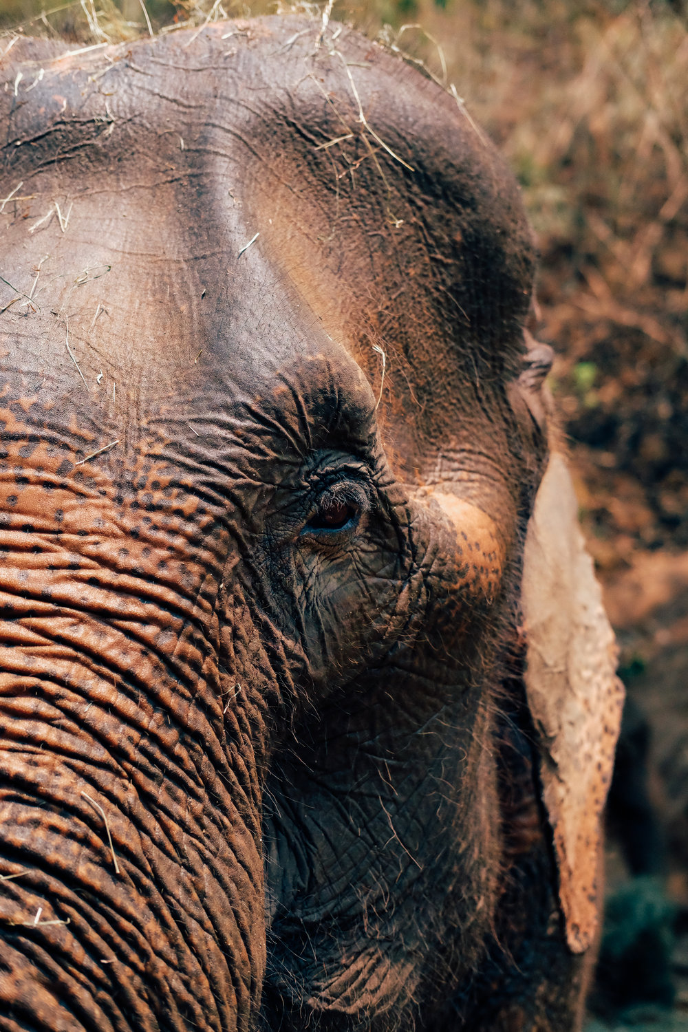 Up close with an elephant