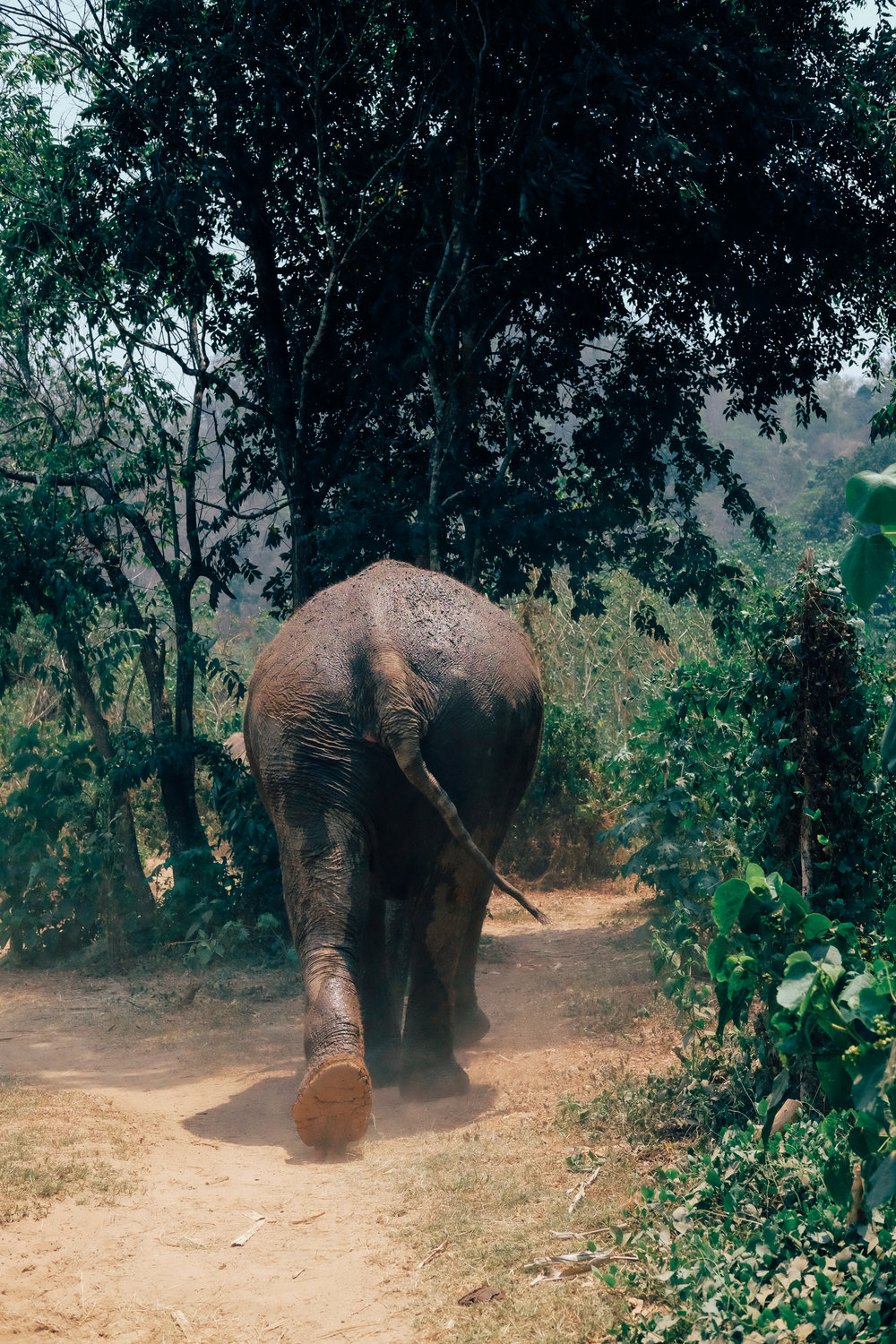 Walking with the elephants at the Elephant Nature Park