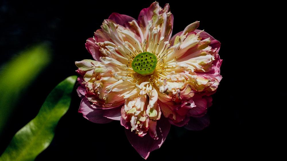 A tropical flower in Krabi