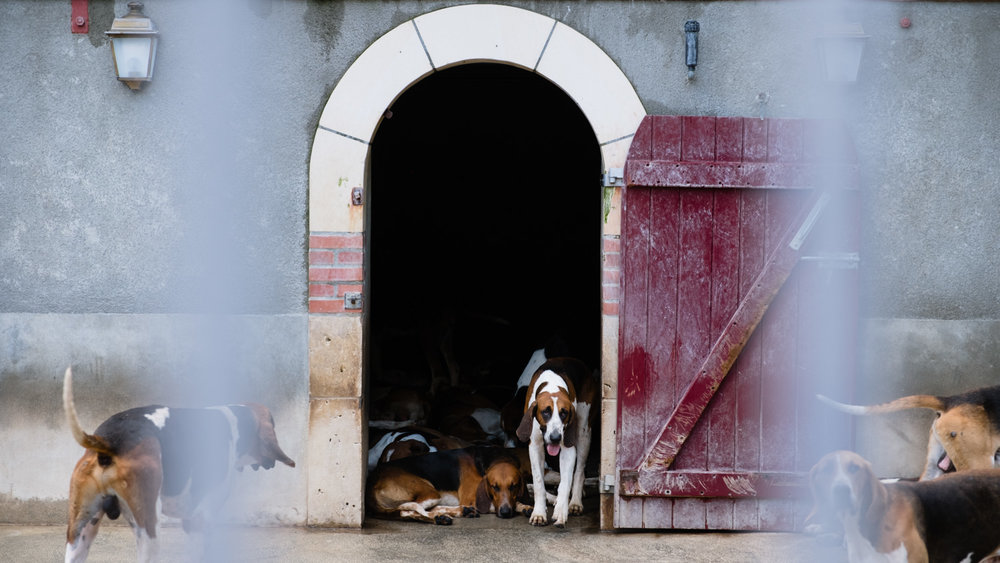 """The hounds of Cheverny - Travel photography and guide by © Natasha Lequepeys for """"And Then I Met Yoko"""". #loirevalley #france #travelguide #travelphotography #valdeloire"""