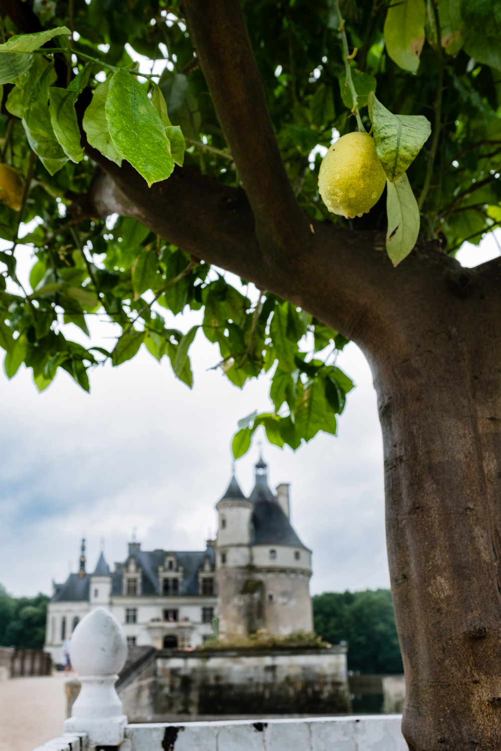 A lemon tree in front of Chaumont