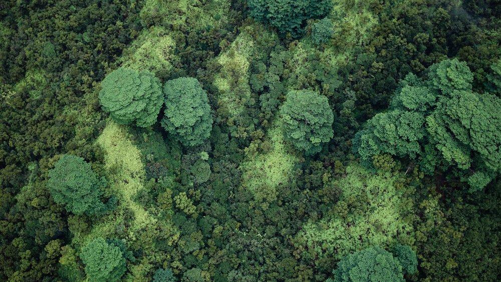 An aerial view of trees in Kauai