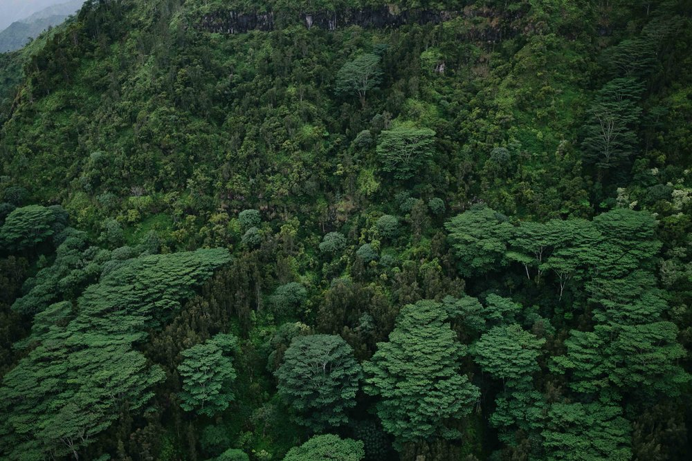 The trees look like broccoli from the sky