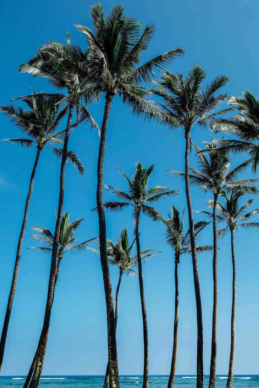 Island life in Kauai